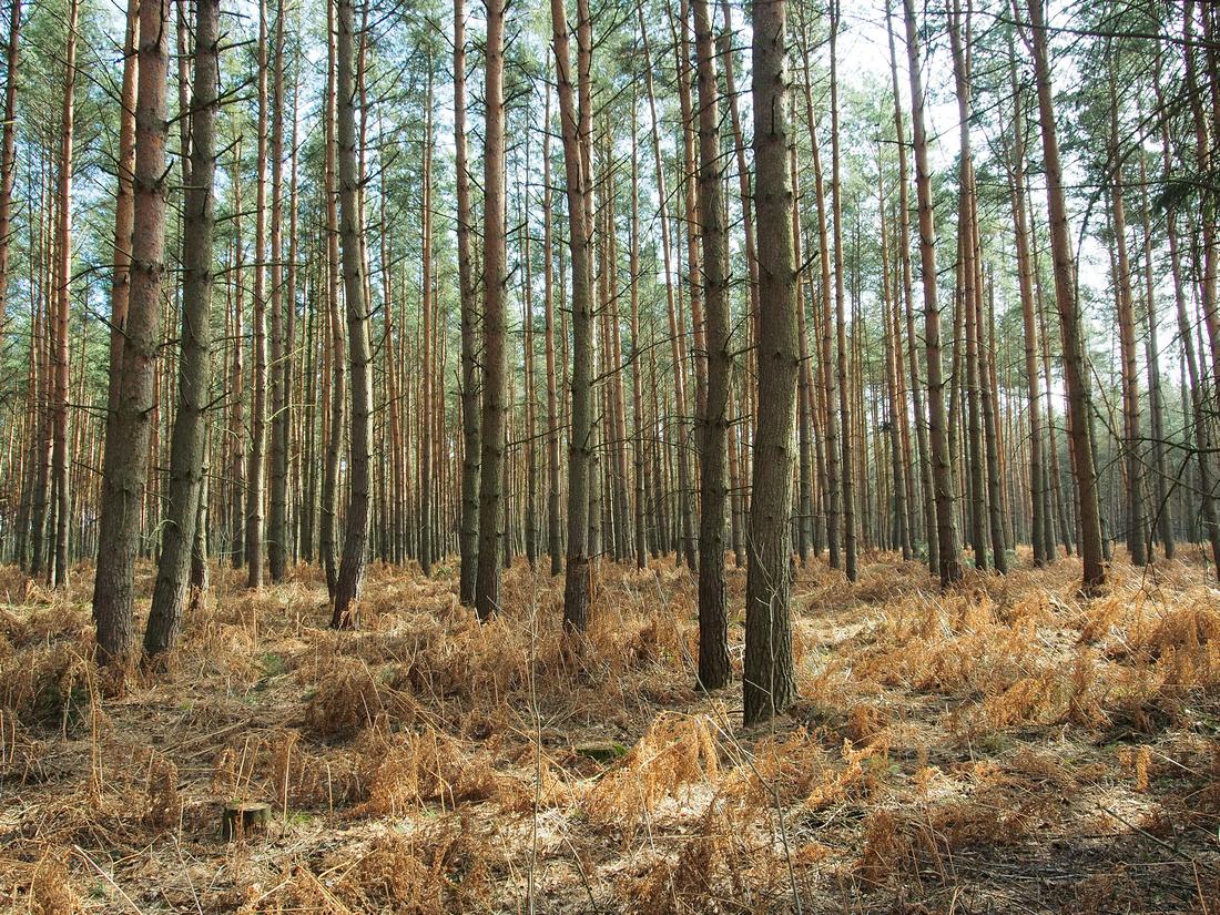 Waldrausch